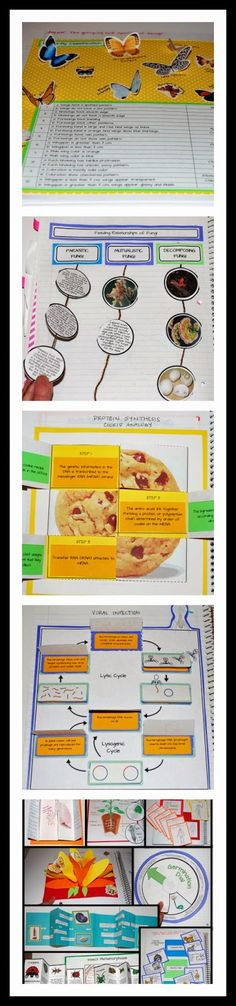 A sampler of Life Science Interactive Notebook foldables - original, engaging and just plain awesome!