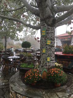 Cafe Bar, Plants, Plant, Planets