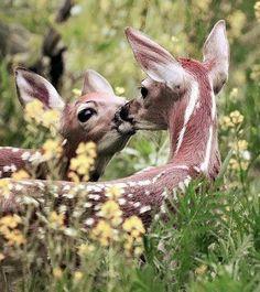 Bambi's