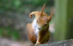 cool, squirrel