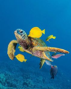 Galapagos Island underwater wildlife...