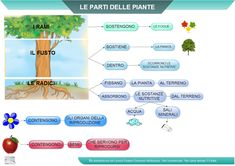 Le Piante Sc. Elementare | AiutoDislessia.net Science, School, Geography, Spring