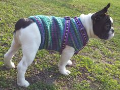 Items similar to Dog Sweater - Hand Knit dog sweater - Custom made dog sweater - - handmade dog clothing - made for your dog on Etsy Hand Knitted Sweaters, Dog Sweaters, Hand Knitting, Custom Made, Boston Terrier, Trending Outfits, Handmade Gifts, Dogs, Animals