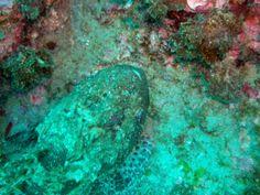Buceo en Tarifa OCEAN ADDICTS
