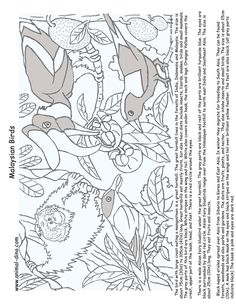 Animal Coloring Page Malaysian Birds Print Size