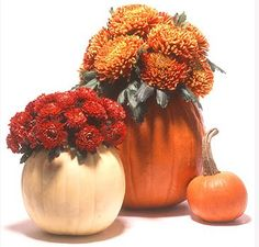 What says fall more than mums and pumpkins? #fall #decorating