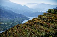 vineyard terraces above the Douro River