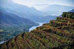vineyard terraces above the Douro River