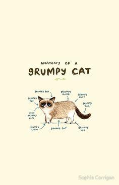 Anatomy of a Grumpy Cat iPhone case
