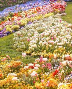 Beautiful Gardens, Beautiful Flowers, Flowers Instagram, Best Ads, Stepping Stones, Fields, Vineyard, Photo And Video, Spring