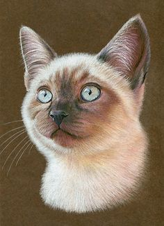 """How to Draw a Cat"" - Karen Hull, color pencils on toned paper {Siamese feline animal illustration} miniatureartbykhull.com"