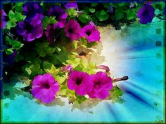 #Nature  #petunias  #flowers #garden