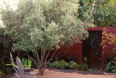 Olive in DG -- Suzanne Arca Design