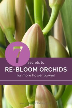 Orchids are amazing because of their astonishingly long-lasting blooms, but what happens when the flowers are gone? Here are 7 tips to re-bloom your orchids