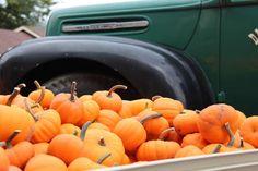Here are all the tiny types of pumpkins for your autumn decor #autumn #fall #decor #pumpkins When To Plant Pumpkins, Small Pumpkins, Mini Pumpkins, White Pumpkins, Natural Fall Decor, Types Of Pumpkins, Pumpkin Varieties, Sweet Dumplings, Rustic Fall Decor
