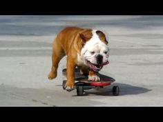 Skateboarding Dog (videos)