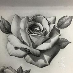 Added another rose to this page Done with graphite pencils #rose...