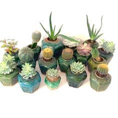 Oude gemberpotjes met cactussen