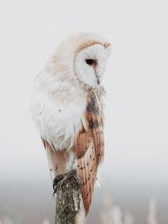 Amazing Owl Pictures