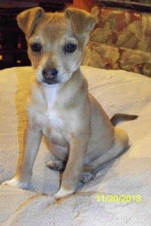 THE DAVINCI FOUNDATION FOR ANIMALS RESCUE ACROSS THE NATION lizardmarsh: Cleveland MS:LOST DOG!! Please help Alvin!