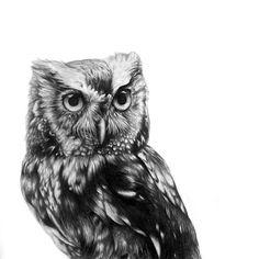 Owl ~ Photorealistic Pencil Portraits of Animals - My Modern Metropolis