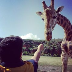 Playing with a giraffe #giraffe #cabarceno #animal