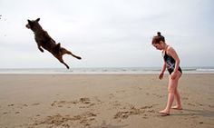 The Guardian website good articles on photography A dog leaping on Aberdovey beach
