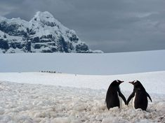 (vía Penguin Picture — Antarctica Photo — National Geographic Photo of the Day)