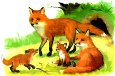 Forest Theme, Fox Art, Forest Animals, Cute Characters, Pictures To Paint, Pet Birds, Habitats, Baby Animals, Illustrators