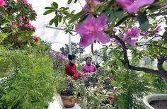 아름다운 꽃풍경이 펼쳐진 국제친선식물관1