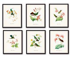 Hummingbird Print Set 1 - Giclee Canvas Art Bird Prints – Belle Maison Art
