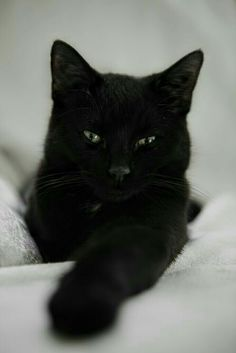 Cat Care: Top Tips For A Healthy Feline ** More details can be found by clicking on the image. Pretty Cats, Beautiful Cats, Animals Beautiful, Pretty Kitty, I Love Cats, Crazy Cats, Cool Cats, Kittens Cutest, Cats And Kittens