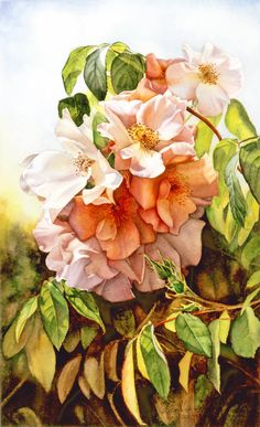'Sally Holmes'. Watercolor By Susan Harrison-Tustain:  Learn how to paint this painting/beautiful rose and many other subjects in my DVD 'Susan Harrison-Tustain's One on One Watercolor Workshops' 2 disc set. www.susanart.com