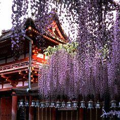 Wunderschön der Kasuga-Schrein im Nara-Park in Japan.