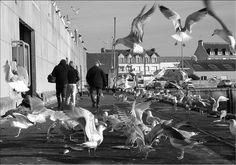 Criée st guenole penmarc'h - les goélands... | Finistère Bretagne
