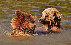 Bären, Wildpark Poing, Spielen