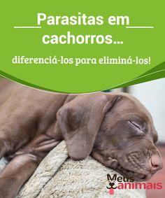 Parasitas internos, pulgas e carrapatos em cães e gatos  #Parasitas em seus #animais de estimação, pulgas e #carrapatos como eliminá-los, #doenças causadas por parasitas, o perigo dos vermes em animais de estimação. #Saúde