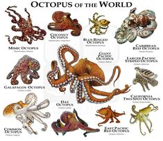Types Of Octopus, Red Octopus, Zebra Shark, Leopard Shark, National Geographic, Octopus Vulgaris, Kinds Of Turtles, Coconut Octopus, Freshwater Turtles