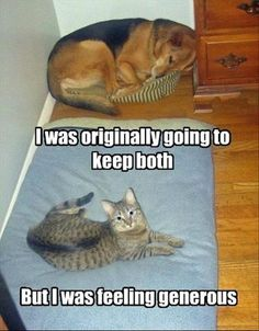 what's with dogs and cats that one want's to get one's place?...generous ha ha