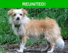 Great news! Happy to report that Benji has been reunited and is now home safe and sound! :)