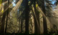 به تازگی کمپینی در آمریکا راهاندازی شده تا با کاشت میلیاردها اصله درخت سیاستهای آب و هوایی دونالد ترامپ تعدیل و بیتوجهیهای وی به مساله تغییرات اقلیمی جبران شود.  به گزارش آیسام و به نقل از ایسنا، در این کمپین قرار است حدود ۱۰ میلیارد اصله درخت در آمریکا کاشته