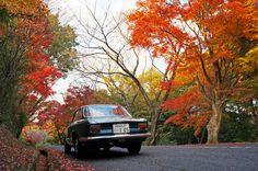 Giulia and autumn leaves