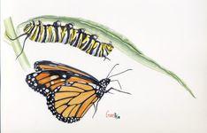 Mariposa Monarca y su oruga. Monarch butterfly and its caterpillar. Monarch Caterpillar, Monarch Butterfly, Life Cycles, Tatoos, Clip Art, Positivity, Watercolor, Artist, Watercolor Painting