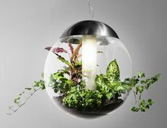 Pendant Lamp That Lights, Grows & Cleans The Air: Babylone By Greenworks.