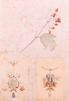 Fleurs de viorne, études de plantes by Philippe Wolfers, 1901. KIK-IRPA, Brussels (Belgium), CC BY-NC-SA
