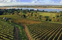 Les vignobles ligériens en Anjou