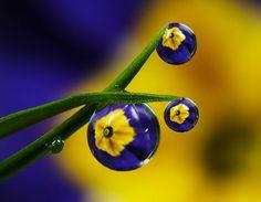 Macro Photographie par Alistair Campbell : Des Gouttelettes de Fleurs
