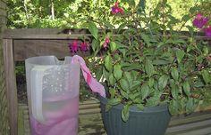 Toalha molhada também rega a planta