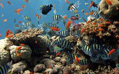 Colorful Coral Reef Wallpaper   155110ZAx 高清壁纸揭秘深海的炫丽~