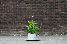Why didn't I think of this?  Watch This Expandable Flower Pot Grow (and Grow)
